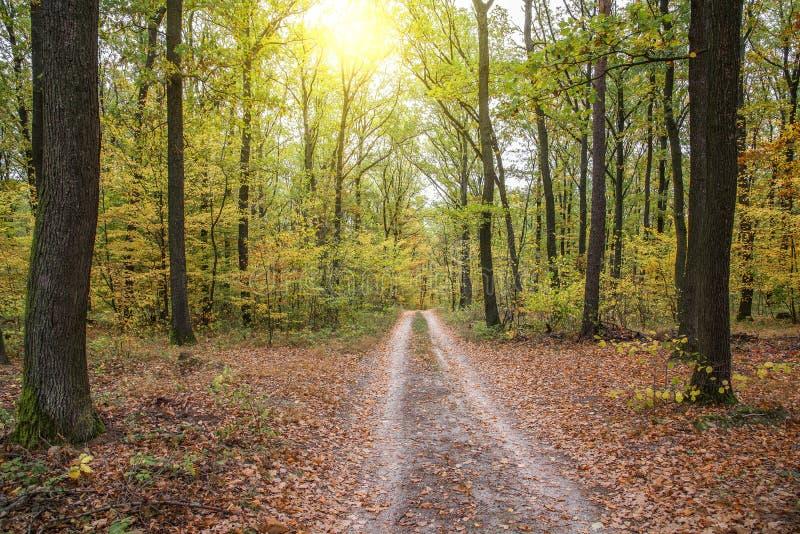 Paisaje del bosque del otoño con el camino de las hojas de la caída Sendero en naturaleza del bosque del otoño de la escena fotos de archivo libres de regalías
