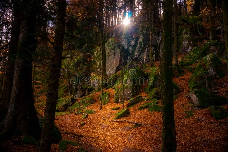 Paisaje del bosque del otoño con el sol que brilla a través de árboles Pista de senderismo cubierta con las hojas muertas anaranj imágenes de archivo libres de regalías