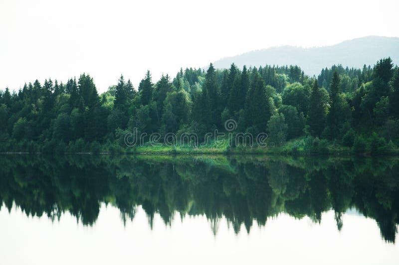Paisaje del bosque reflejado en el lago tranquilo fotos de archivo libres de regalías