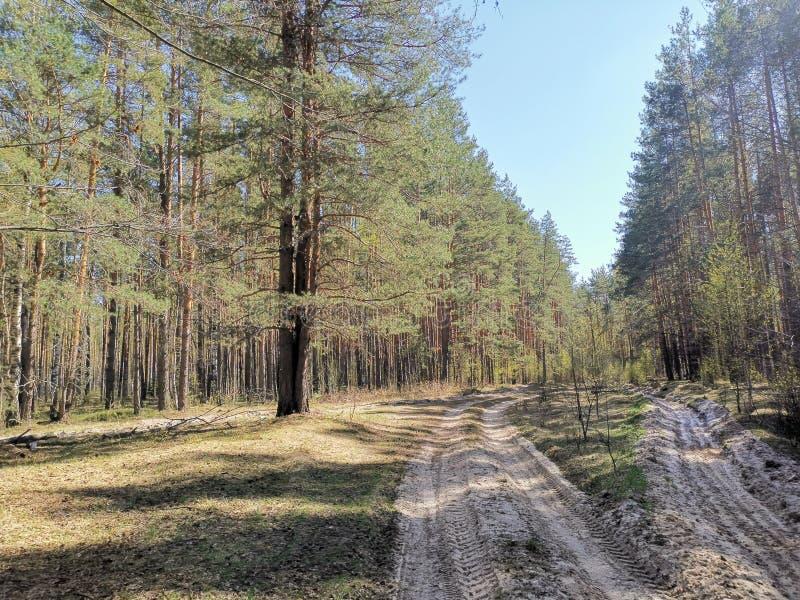 Paisaje del bosque soleado en la región de Nizhny Novgorod en la primavera 2019 imagen de archivo