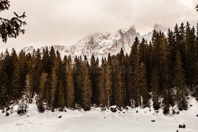 Paisaje del bosque y de la montaña del abeto con nieve foto de archivo libre de regalías