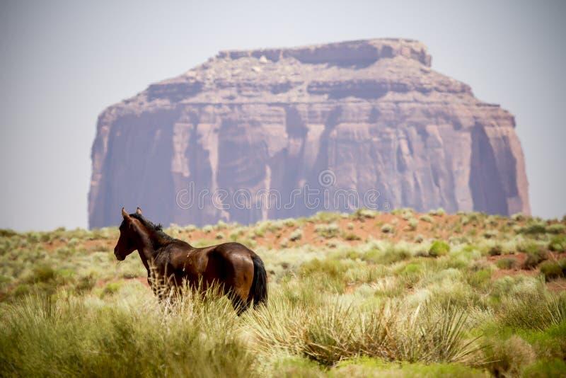 Paisaje del caballo salvaje fotografía de archivo