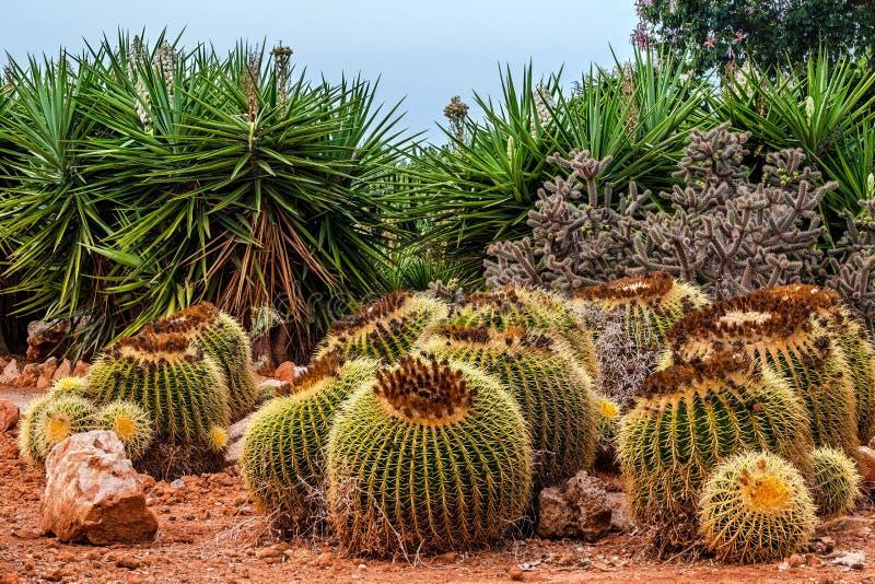 Paisaje del cactus Cactus México Campo del cactus Jardín de Cactoo fotos de archivo libres de regalías