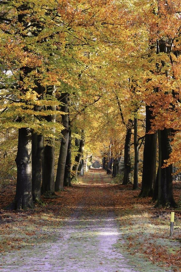 Paisaje del camino del otoño imágenes de archivo libres de regalías