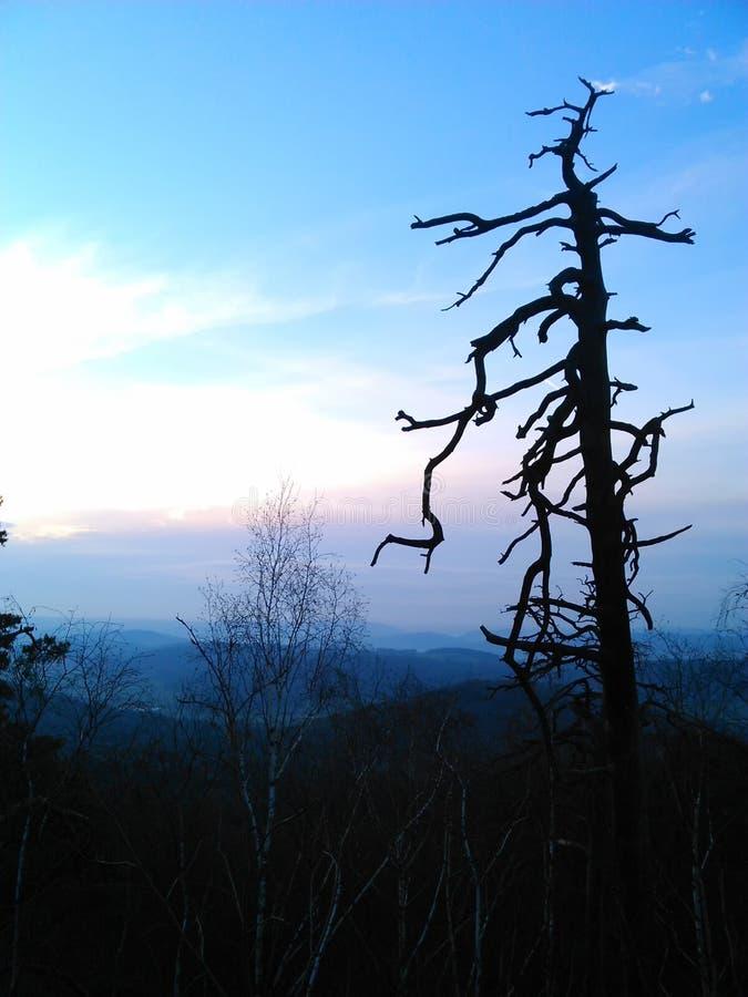 Paisaje del campo con el árbol seco solitario en la oscuridad de la tarde foto de archivo