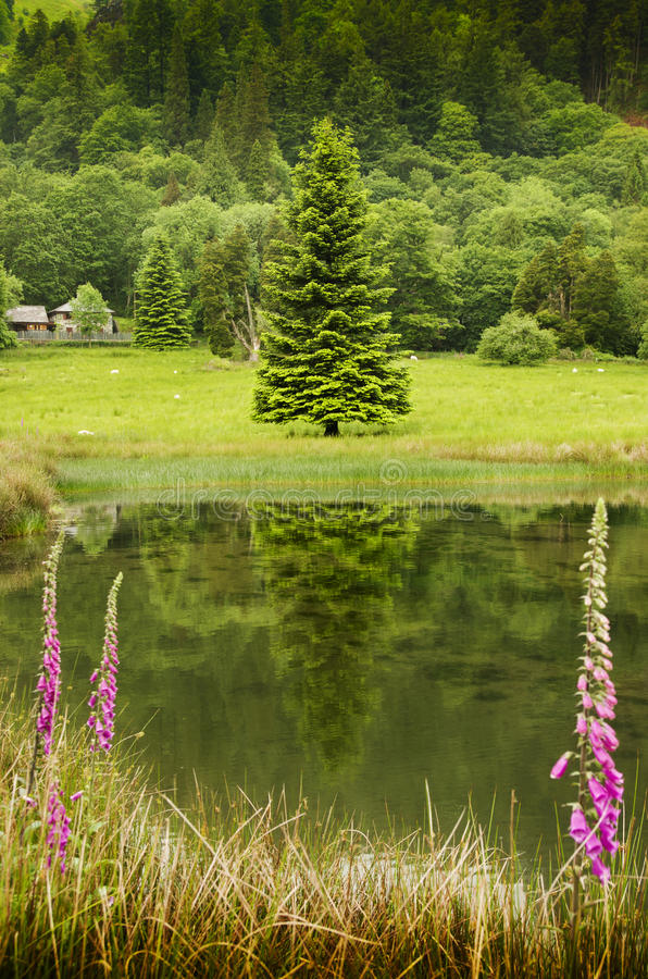 Paisaje del campo con los prados, la charca y el bosque florecientes en el fondo, Reino Unido, Europa imagen de archivo libre de regalías