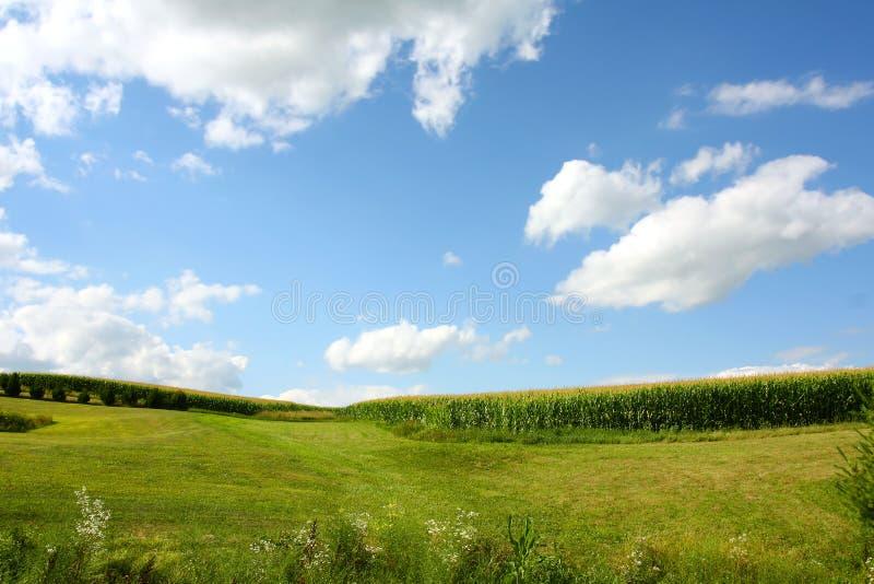 Paisaje del campo de maíz imagenes de archivo