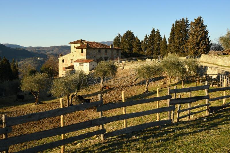Paisaje del campo toscano casa típica de la granja en Toscana con los olivos, el ciprés y las vacas Italia imágenes de archivo libres de regalías