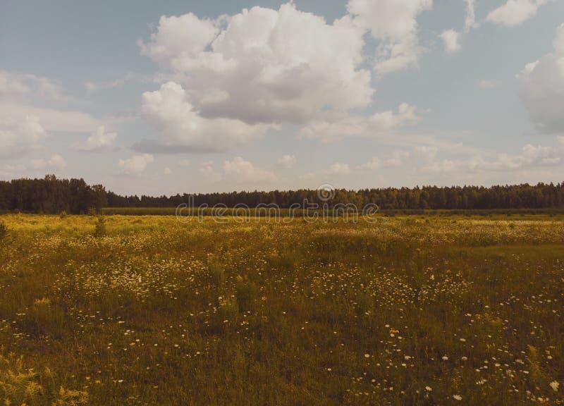 Paisaje del campo del verano imagen de archivo libre de regalías