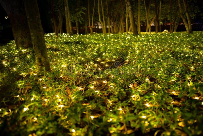 Paisaje del campo y del prado de hierba adornados por las luces llevadas fotos de archivo libres de regalías