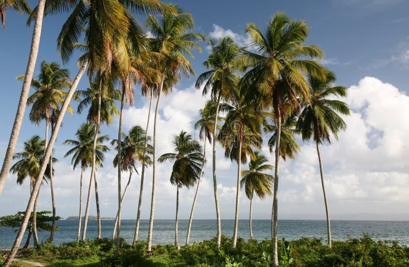 Paisaje del Caribe fotos de archivo