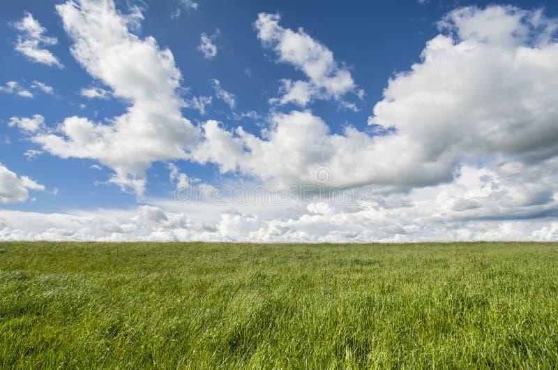 Paisaje del cielo de la hierba fotografía de archivo libre de regalías