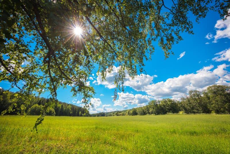 Paisaje del concepto del fondo del verano; campo; rayos del sol a través de la corona del árbol; cielo azul; nubes blancas imagen de archivo libre de regalías