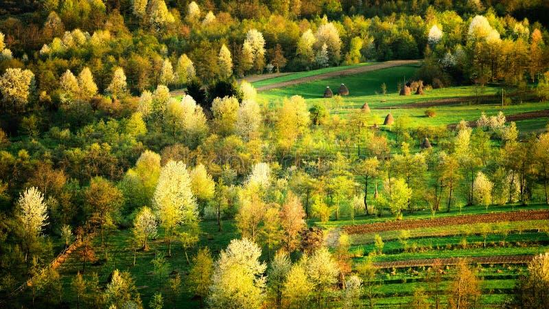 Paisaje del condado de Maramures en el tiempo de primavera con los árboles florecientes, Rumania imagen de archivo libre de regalías