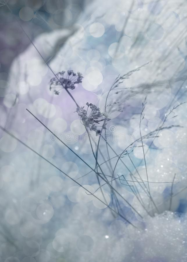 Paisaje del cuento de hadas del invierno foto de archivo libre de regalías