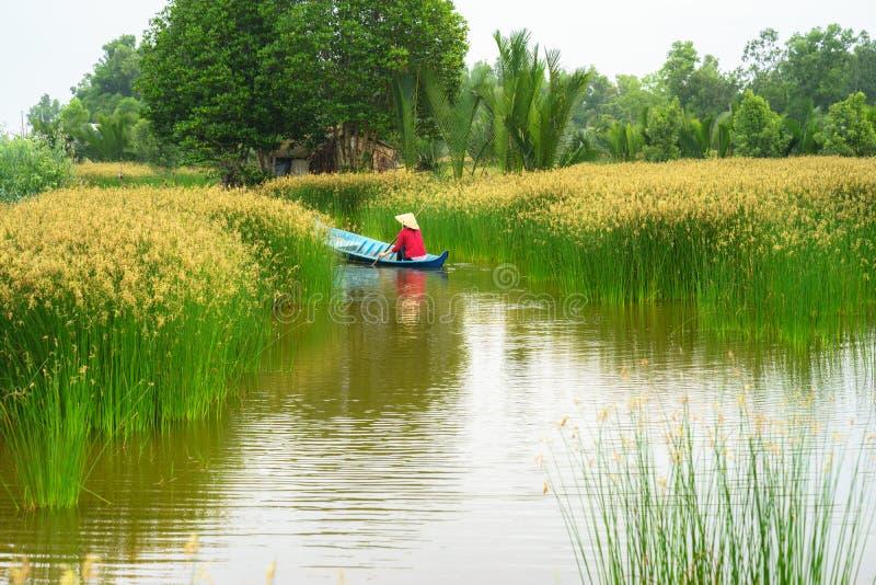Paisaje del delta del Mekong con el barco de rowing vietnamita de la mujer en Nang - tipo de campo del árbol de la precipitación, imagen de archivo libre de regalías