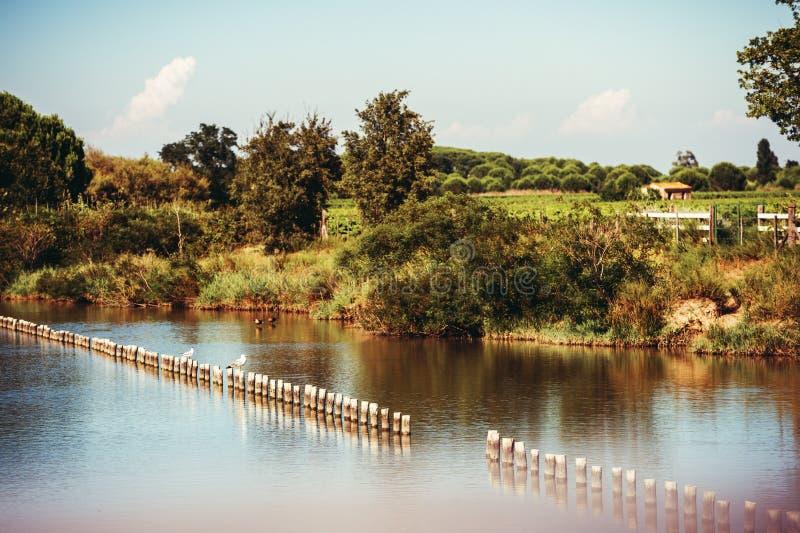 Paisaje del delta del río Rhone, Camargue fotografía de archivo libre de regalías