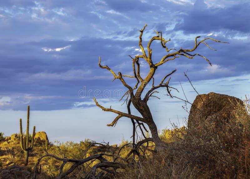 Paisaje del desierto con el cactus y el árbol muerto fotos de archivo