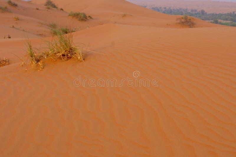 Paisaje del desierto con la arena anaranjada imagen de archivo libre de regalías