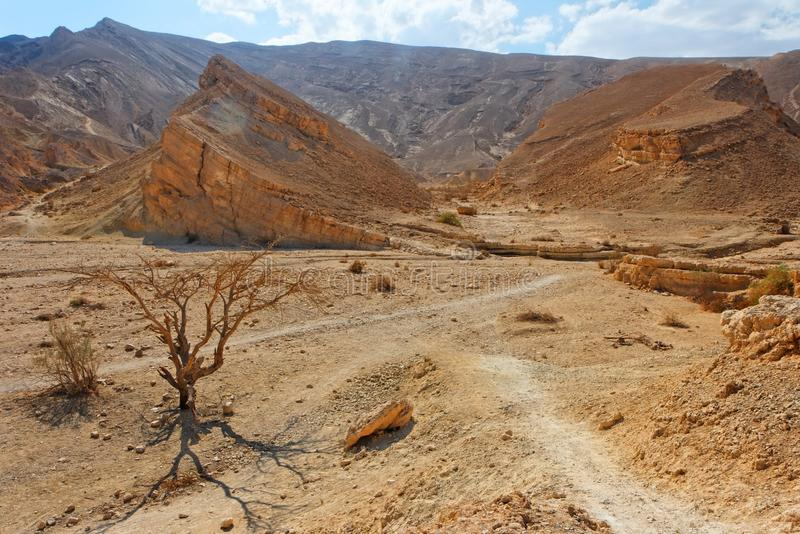 Paisaje del desierto con los árboles secos del acacia imagen de archivo libre de regalías