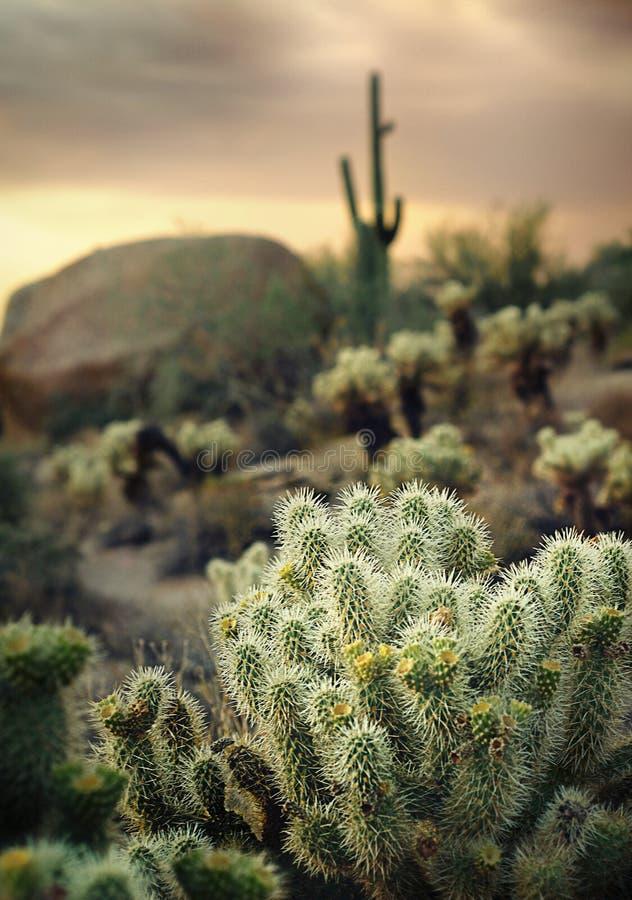 Paisaje del desierto de Arizona imagenes de archivo