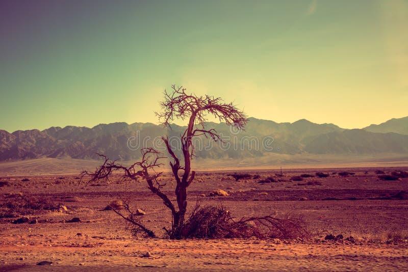 Paisaje del desierto de la montaña Árbol seco en el desierto imagen de archivo libre de regalías