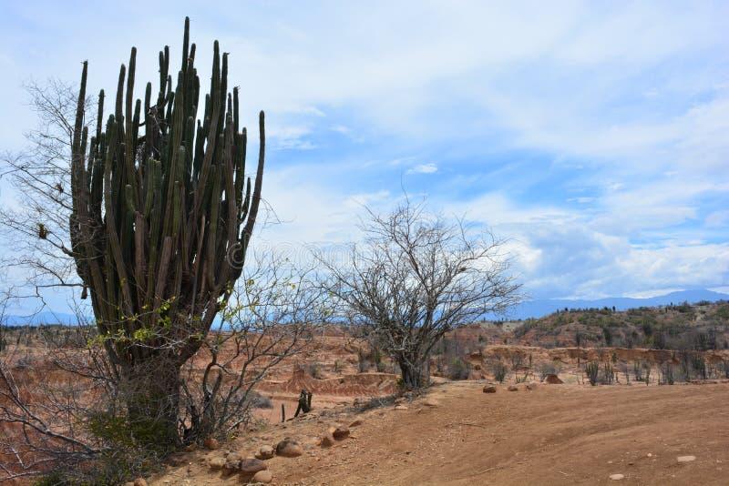 Paisaje del desierto de Tatacoa, en Neiva, Colombia foto de archivo libre de regalías