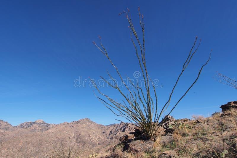 Paisaje del desierto del parque nacional de Saguaro, Arizona imágenes de archivo libres de regalías