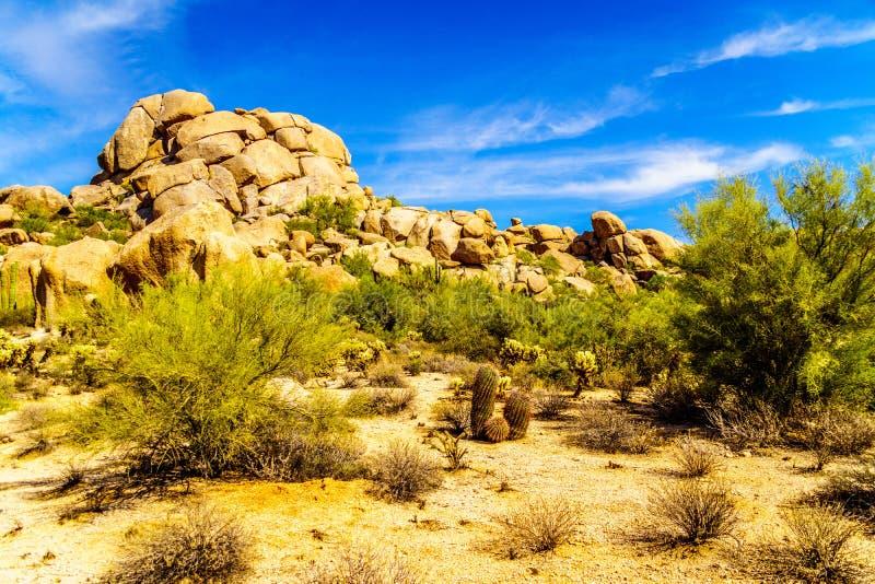 Paisaje del desierto y formación de roca grande con los cactus de barril imágenes de archivo libres de regalías