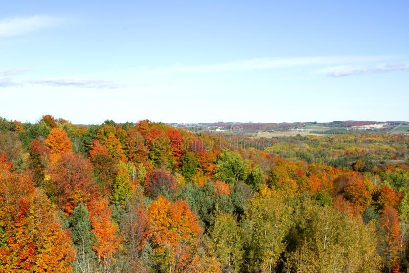 Paisaje del follaje de otoño imagen de archivo