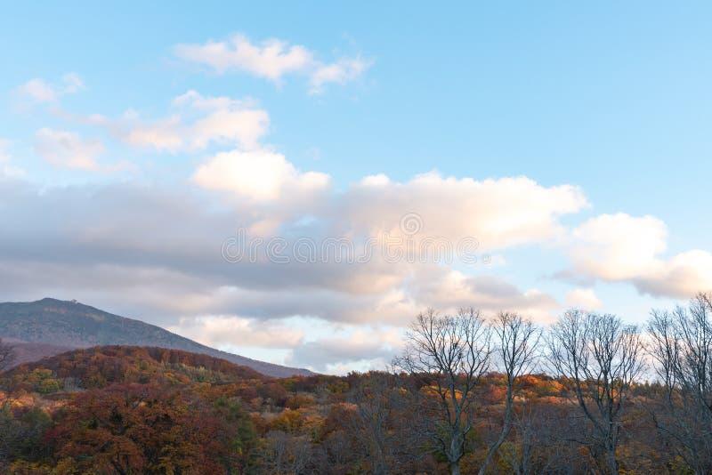 Paisaje del follaje del otoño en la meseta de Kayano-Kogen, Aomori, Japón fotografía de archivo
