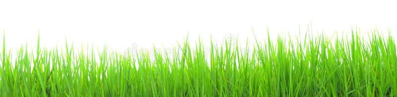 Paisaje del fondo del campo del arroz fotografía de archivo libre de regalías