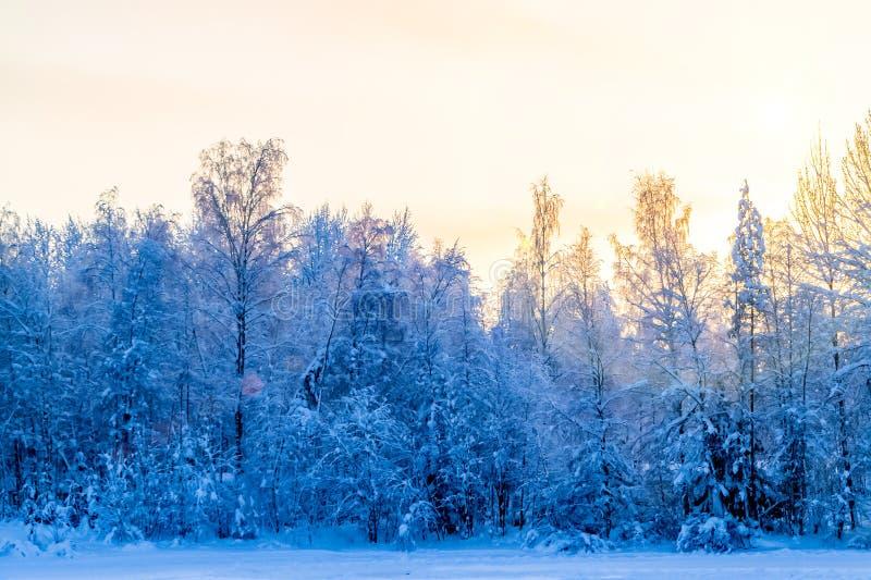 Paisaje del invierno - árboles nevados a lo largo del camino en los rayos de la puesta del sol fotos de archivo libres de regalías