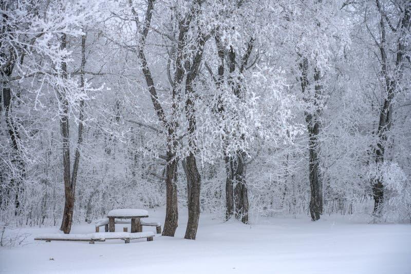 Paisaje del invierno, árboles nevados y un banco con una tabla a relajarse debajo de la nieve en el bosque foto de archivo libre de regalías