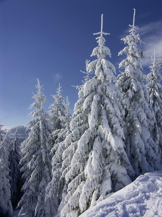 Paisaje del invierno fotos de archivo