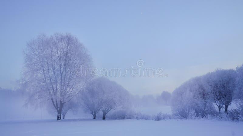 Paisaje del invierno Ajardine con los árboles hermosos en la helada y empáñese imágenes de archivo libres de regalías