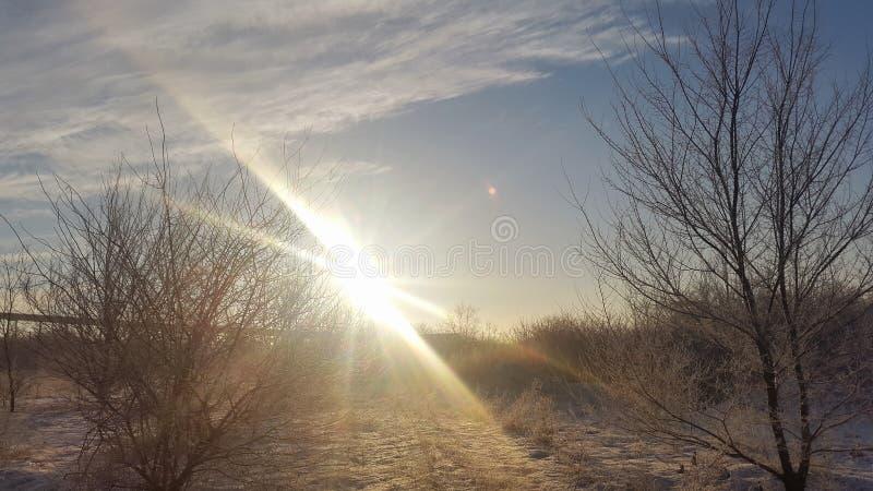 Paisaje del invierno cielo y árboles del sol fotografía de archivo