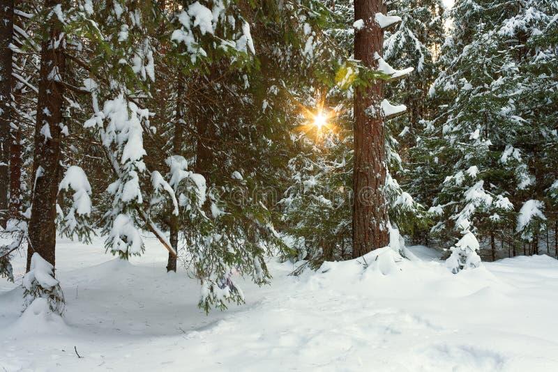 Paisaje del invierno con el bosque y el sol foto de archivo libre de regalías