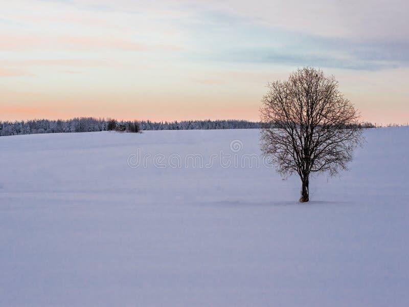 Paisaje del invierno con el campo solo del árbol y de nieve fotografía de archivo libre de regalías