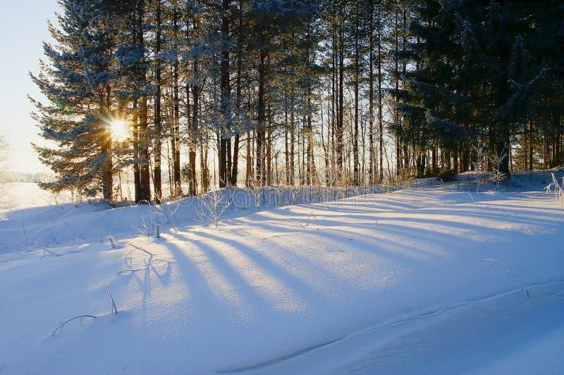 Paisaje del invierno con la línea de árboles e hierba en nieve profunda y escarcha en luz del sol caliente con la llamarada de la fotos de archivo