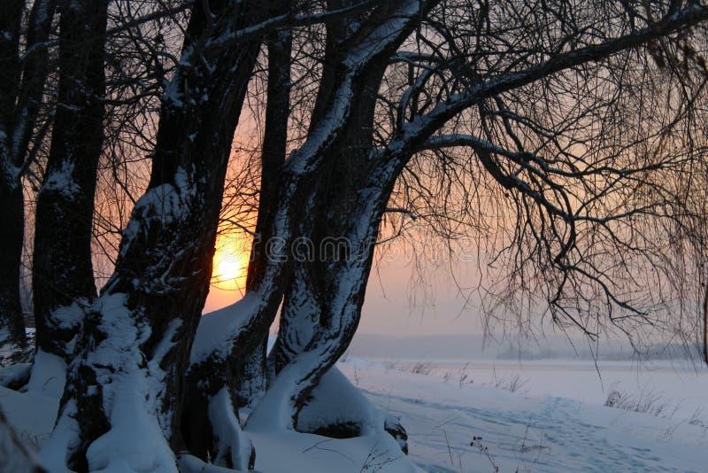 Paisaje del invierno con los árboles nevados, en el lago o el río en la puesta del sol o la salida del sol imágenes de archivo libres de regalías