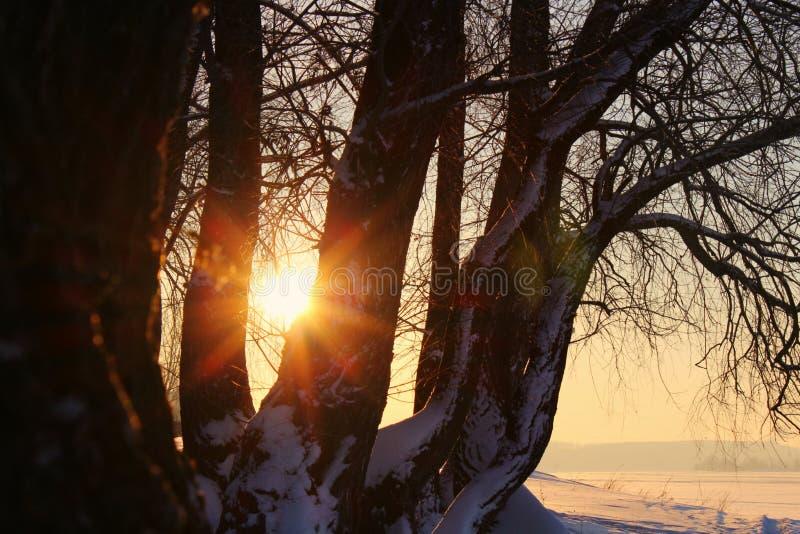 Paisaje del invierno con los árboles nevados, en el lago o el río en la puesta del sol o salida del sol con el sol de los rayos fotografía de archivo