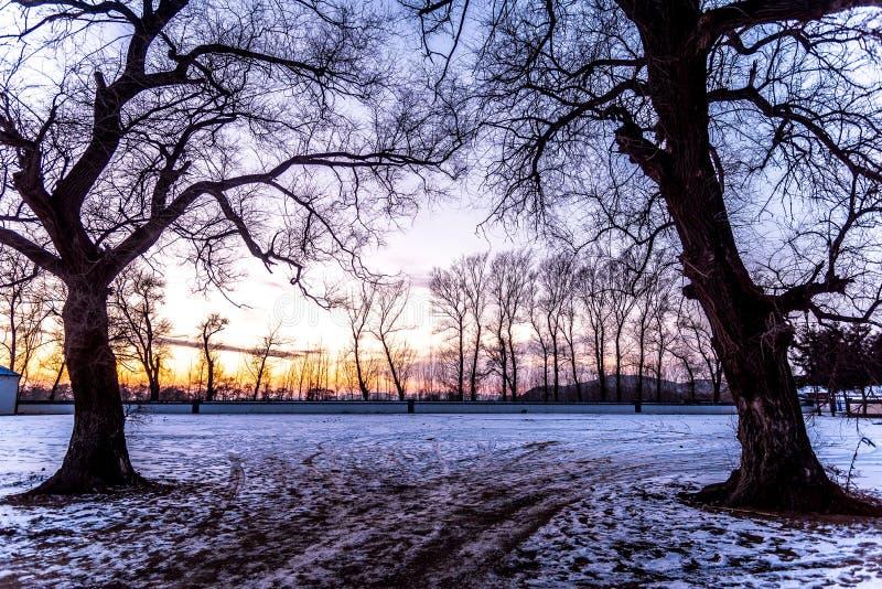 Paisaje del invierno con los árboles y bosque, árbol seco sin la hoja con el cielo de la puesta del sol y la nieve cubierta de ti fotos de archivo libres de regalías