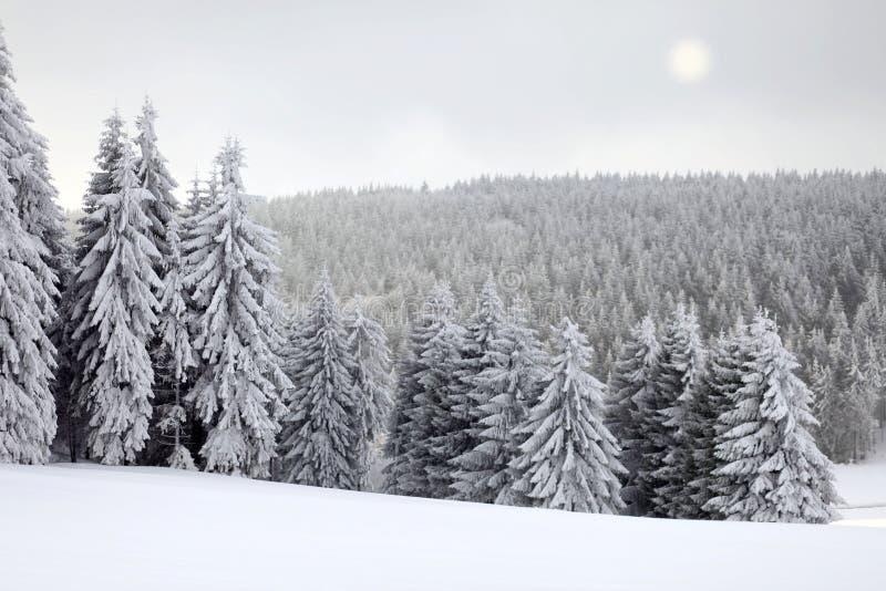 Paisaje del invierno con Sun foto de archivo libre de regalías