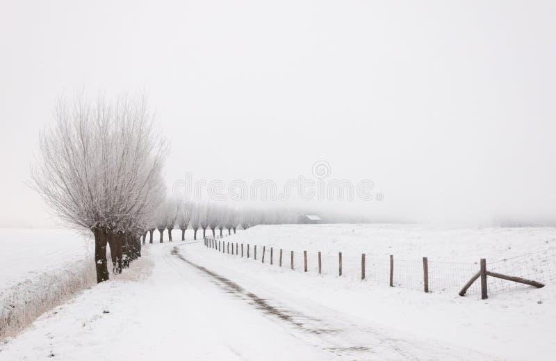 Paisaje del invierno con una fila de los sauces del árbol descopado imagen de archivo