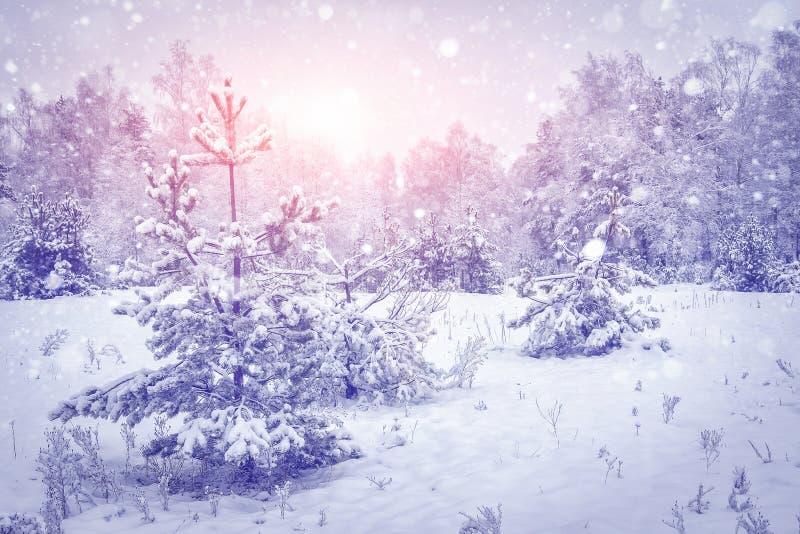 Paisaje del invierno Copos de nieve en bosque nevoso del invierno en la salida del sol viva Árboles de navidad mágicos en luz bri imagen de archivo