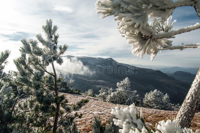 Paisaje del invierno de la montaña El sol es brillante Las montañas se pueden ver a través los árboles fotografía de archivo