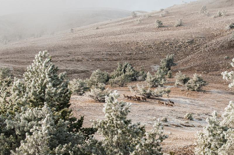 Paisaje del invierno de la montaña El sol es brillante Valle nevado Paisaje a través de los árboles imágenes de archivo libres de regalías