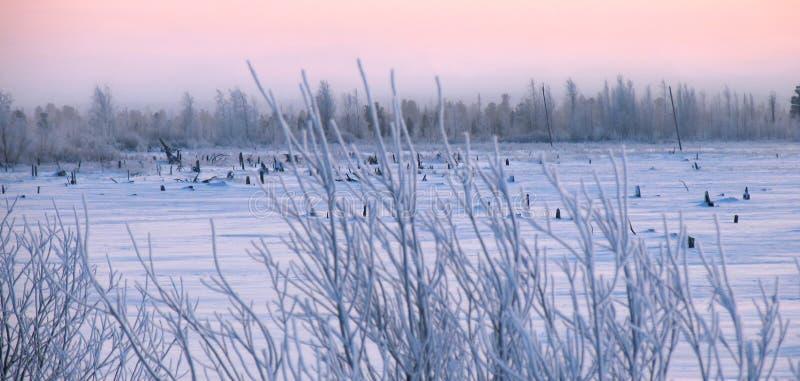 Paisaje del invierno de la naturaleza. foto de archivo libre de regalías