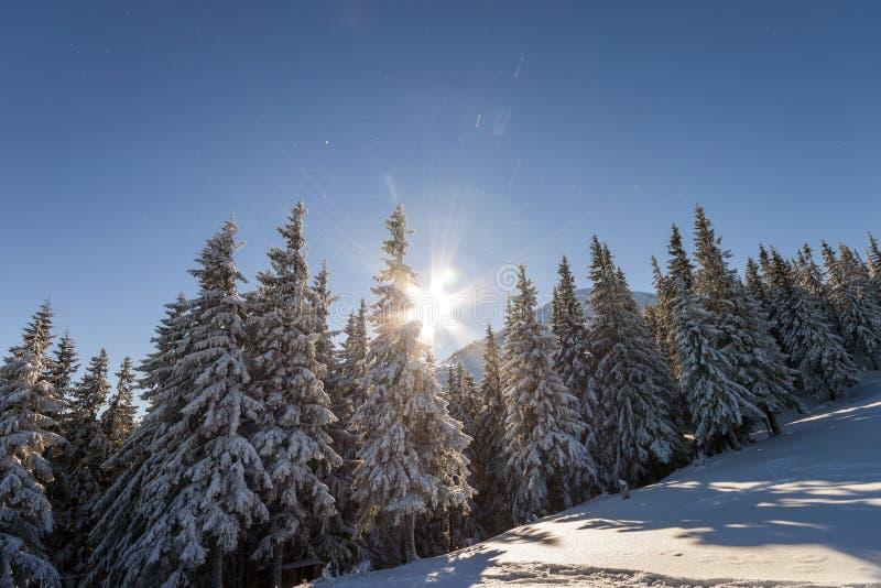 Paisaje del invierno de la Navidad Los abetos altos hermosos cubiertos con nieve y helada en cuesta de montaña se encendieron por imagen de archivo libre de regalías